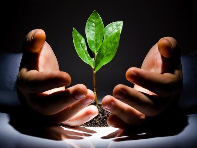 Банковская гарантия для индивидуального предпринимателя